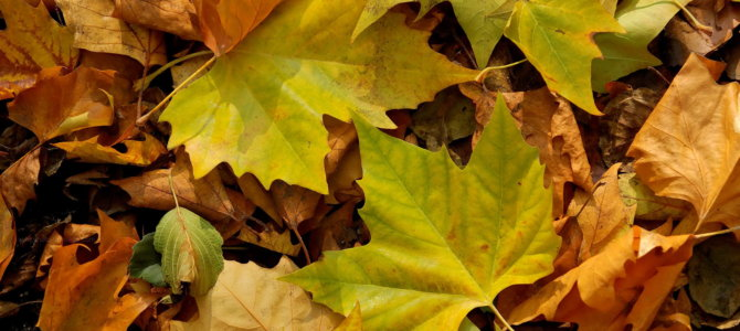Vive l'automne ! Tombent les feuilles…et les fruits de saison. Poussent les champignons.